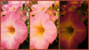 Another Nursery Flower (collage) by kath660