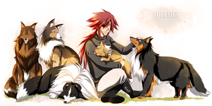:: Shelties :: by Vienix