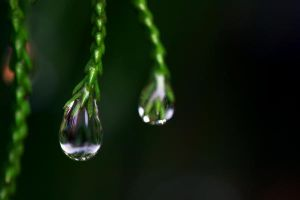 Droplet 62 by josgoh