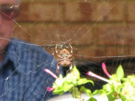 Spider in web series two 02 by teletran