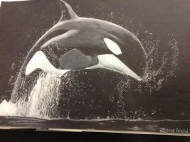 Killer Whale  by Desiree226