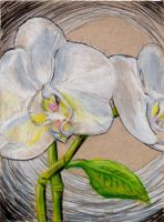 Art366 36 WhiteOrchids by Timmytushoes