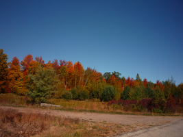 Fall Colors by LadyNoise