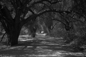 Avenue, Malibu Creek, 059 by photoscot