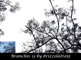 Branches 13 by Brizzolatto55
