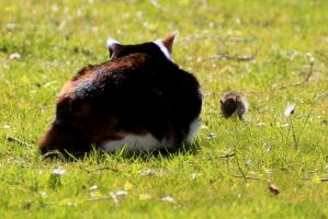 Afternoon with cat and  mouse or rat 2 by pagan-live-style