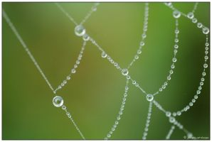 caught in the web - macro by finepix-at