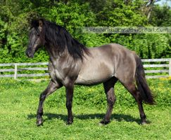 grullo stallion 3 by venomxbaby