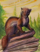 watercolor pine marten by hibbary