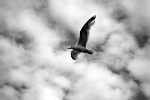 Flying High by lichtie