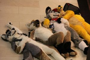 The End of a Con - MFF 2012 by LightningTheFox7