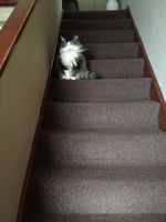 I Own These Stairs by ChloeRhiannonX