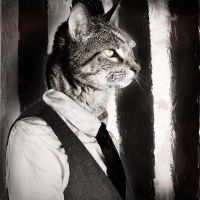 Part cat, Part gangster by absinthalicious