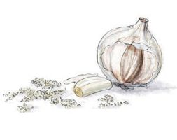 Garlic by torstan
