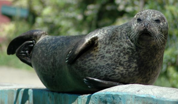 Seal by sun-stock