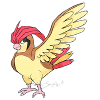 Draw'em All Challenge: 017 Pidgeotto by Saku-Senpai