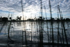 Jacana Water by thedismantled