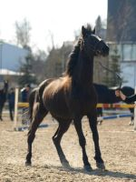 Standardbred by wakedeadman
