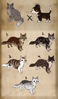 Maine coon mix kitten adopts :TAKEN: by Kultapossu