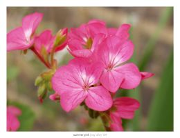 summer pink by Raymate