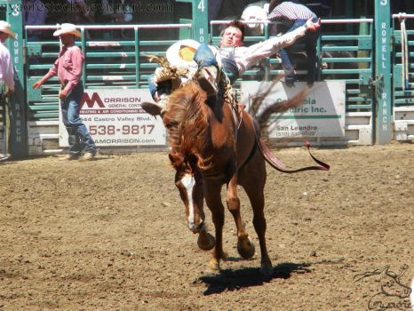 Rowell Ranch Rodeo - 11 by Nyaorestock