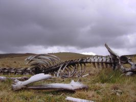 Andes Skeleton by Chestbearman