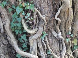 Root Tangle by Sir-Real