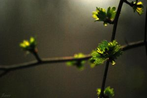season of spring VII by Lk-Photography