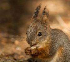 Squirrel 5.6.14 by ErikEK