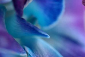 Blue Orchid by DisappearinEbony