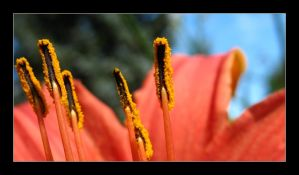 Stamen 3 by MichelleMarie