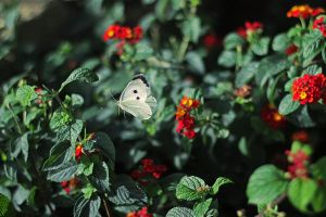 Butterfly I by Kimberly-M
