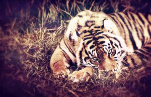 Crouching Tiger by KXZXW