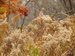 Shades of Autumn 2015, 7 by MadGardens