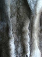 Caribou leg fur 1 by Arctic-Stock