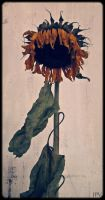 Sunflower by Jotpeh