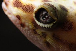 The Eye of the Gecko by James-T-Anthony