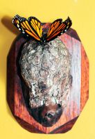 Monarch on Walnut Burl by Meddling-With-Nature