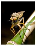 _robber fly_ by deproduct