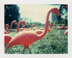 Flamingos by emeph