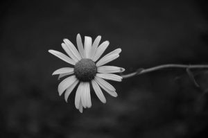 Marguerite. by Gothumanity
