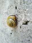 Snail 01 by SigmaCore
