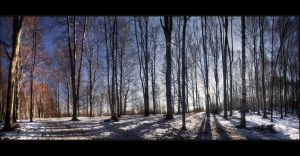 Winter shadows by realityDream