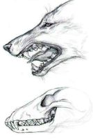 Wolf Study with Skull by GrimVixen