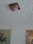 Ceiling Cat Papercraft by Evadine