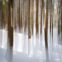 white forest by rdalpes