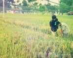 Paddy Field.. by MeOwMeOwNoraPriyanKa