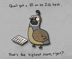 Quail I.Q. Test by IllusionGecko