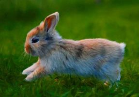 Image Little Rabbit by Col57