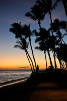 Palm tree sunset 1 - Maui by wildplaces